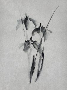 Iris n°2