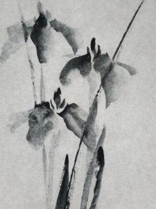 Iris n°1